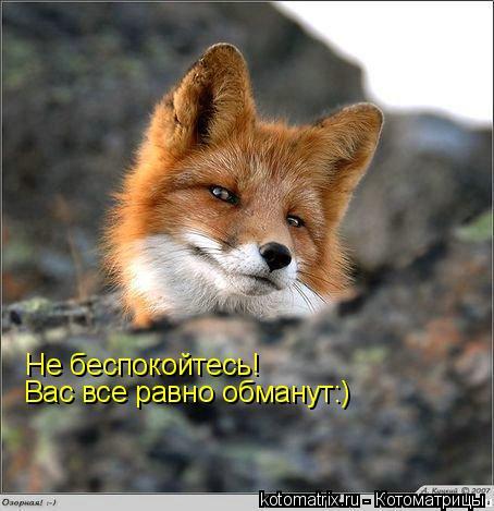 Котоматрица: Не беспокойтесь! Вас все равно обманут:)