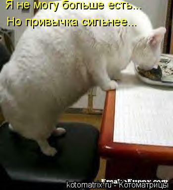 Котоматрица: Я не могу больше есть... Но привычка сильнее...