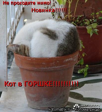Котоматрица: Не проходите мимо! Новинка!!!!!! Кот в ГОРШКЕ!!!!!!!!!!
