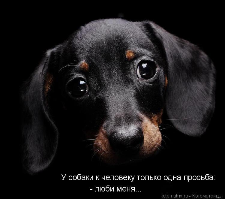Котоматрица: У собаки к человеку только одна просьба:  - люби меня...