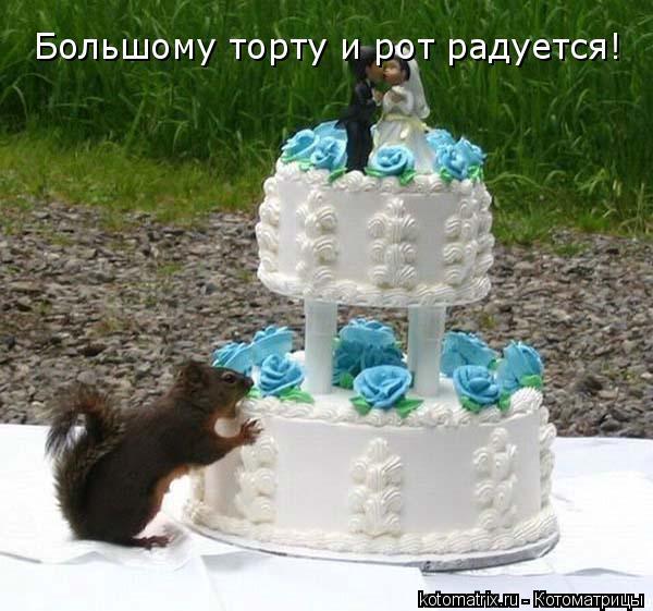 Котоматрица: Большому торту и рот радуется!