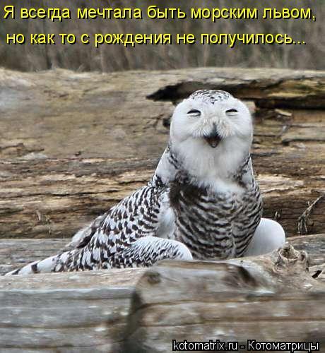 Котоматрица: Я всегда мечтала быть морским львом, но как то с рождения не получилось...