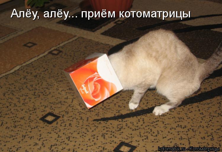 Котоматрица: Алёу, алёу... приём котоматрицы
