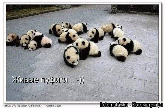Котоматрица: Живые пуфики.. :-))