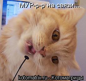 Котоматрица: МУР-р-р на связи...