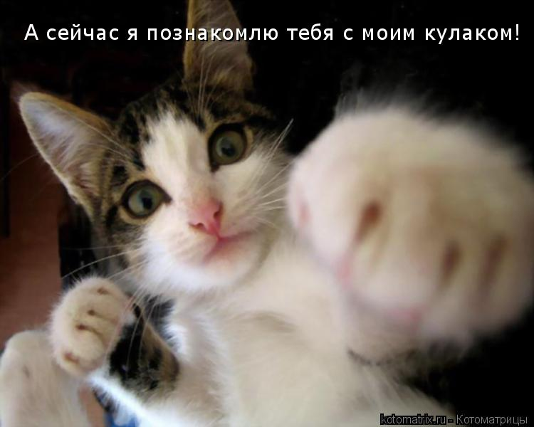 Котоматрица: А сейчас я познакомлю тебя с моим кулаком!