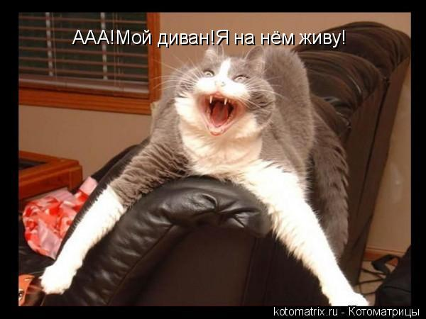 Котоматрица: ААА!Мой диван!Я на нём живу!
