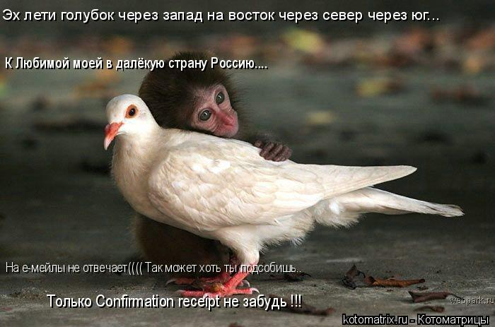Котоматрица: Эх лети голубок через запад на восток через север через юг... К Любимой моей в далёкую страну Россию.... На е-мейлы не отвечает(((( Так может хот