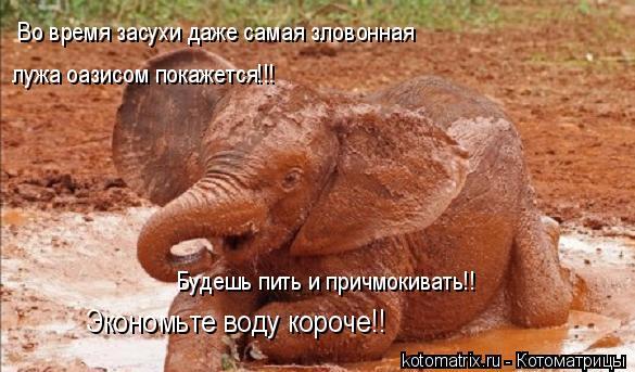 Котоматрица: Во время засухи даже самая зловонная лужа оазисом покажется!!! Будешь пить и причмокивать!! Экономьте воду короче!!