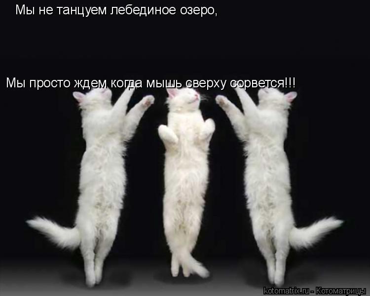 Котоматрица: Мы не танцуем лебединое озеро, Мы просто ждем когда мышь сверху сорвется!!!