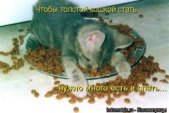 Котоматрица: Чтобы толстой кошкой стать.... нужно много есть и спать...