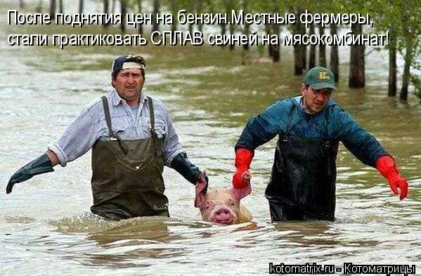 Котоматрица: После поднятия цен на бензин.Местные фермеры, стали практиковать СПЛАВ свиней на мясокомбинат!
