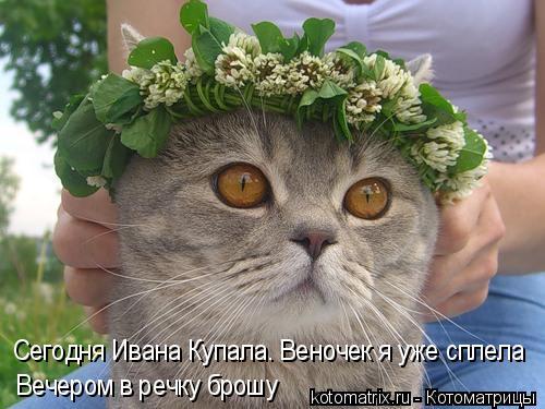 Котоматрица: Сегодня Ивана Купала. Веночек я уже сплела Вечером в речку брошу