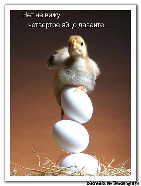 Котоматрица: ...Нет не вижу четвёртое яйцо давайте...