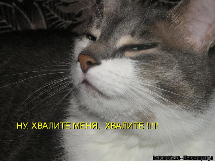 Котоматрица: НУ, ХВАЛИТЕ МЕНЯ,  ХВАЛИТЕ !!!!!