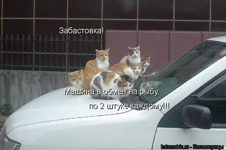 Котоматрица: Забастовка! Машина в обмен на рыбу, по 2 штуке каждому!!!