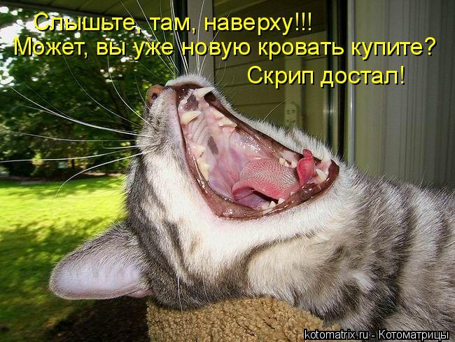 Котоматрица: Слышьте, там, наверху!!! Может, вы уже новую кровать купите?  Скрип достал!
