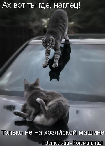 Котоматрица: Ах вот ты где, наглец! Только не на хозяйской машине!