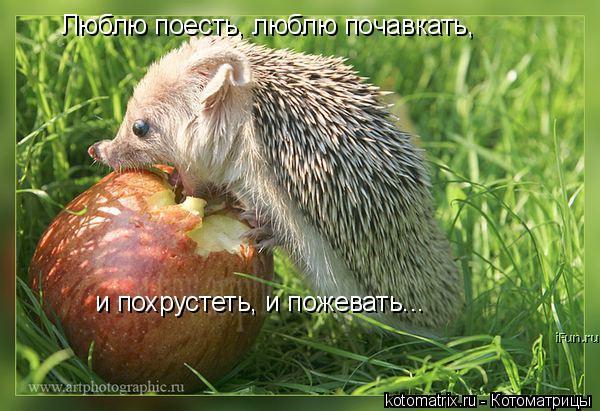 Котоматрица: Люблю поесть, люблю почавкать, и похрустеть, и пожевать...