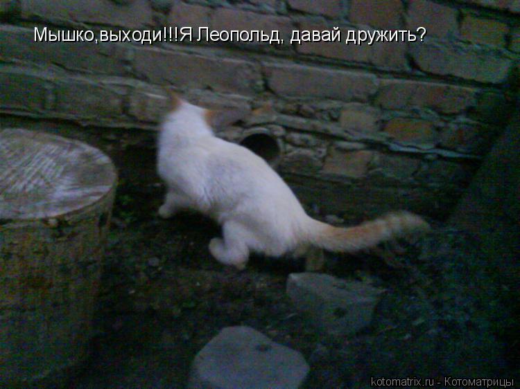 Котоматрица: Мышко,выходи!!!Я Леопольд, давай дружить?