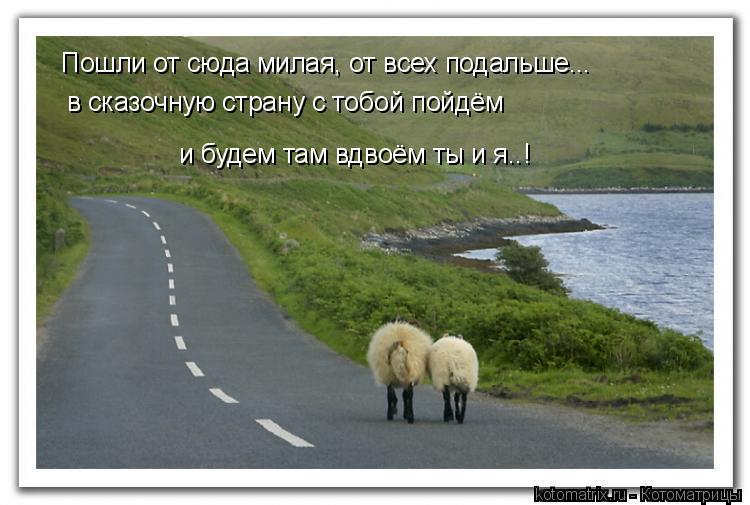 Котоматрица: Пошли от сюда милая, от всех подальше... в сказочную страну с тобой пойдём и будем там вдвоём ты и я..!