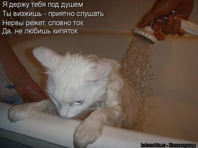 Котоматрица: Я держу тебя под душем Ты визжишь - приятно слушать Нервы режет, словно ток Да, не любишь кипяток