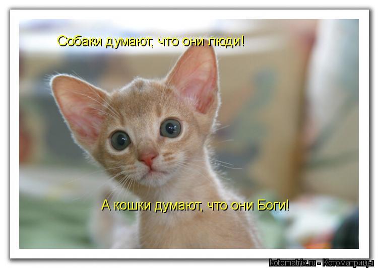 Котоматрица: Собаки думают, что они люди! А кошки думают, что они Боги!