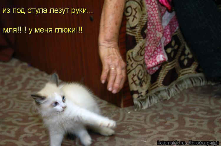 Котоматрица: из под стула лезут руки... мля!!!! у меня глюки!!!
