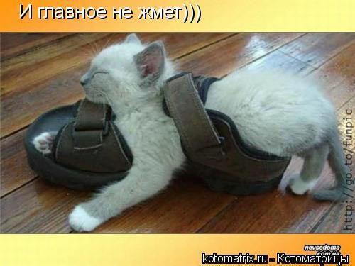 Котоматрица: И главное не жмет)))