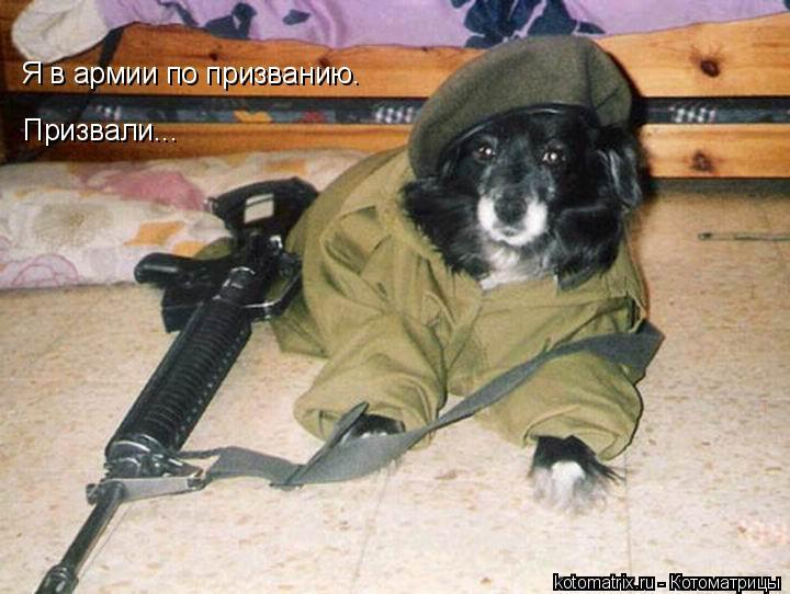 Котоматрица: Я в армии по призванию. Призвали...