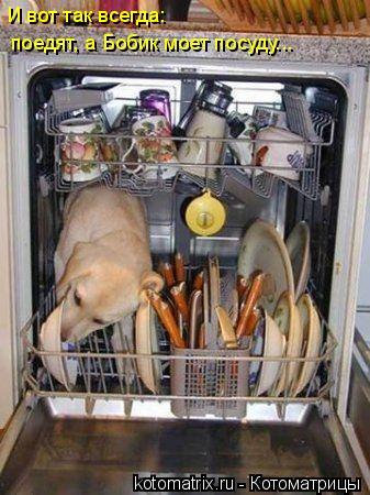 Котоматрица: И вот так всегда: поедят, а Бобик моет посуду...