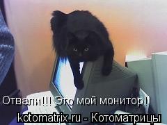 Котоматрица: Отвали!!! Это мой монитор!!