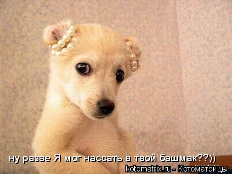 Котоматрица: ну разве Я мог нассать в твой башмак??))