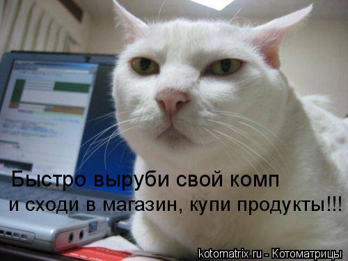 Котоматрица: Быстро выруби свой комп и сходи в магазин, купи продукты!!!