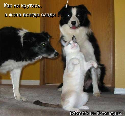 Котоматрица: Как ни крутись, а жопа всегда сзади....
