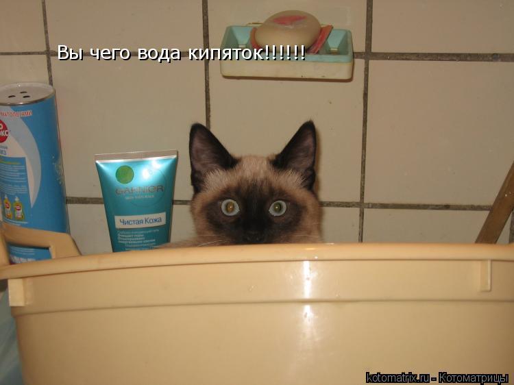 Котоматрица: Вы чего вода кипяток!!!!!!