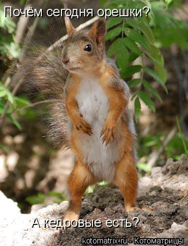 Котоматрица: Почём сегодня орешки? А кедровые есть?