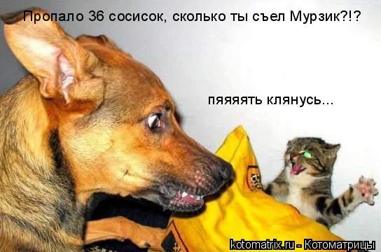 Котоматрица: Пропало 36 сосисок, сколько ты съел Мурзик?!? пяяяять клянусь...