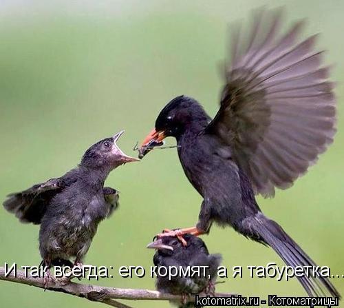 Котоматрица: И так всегда: его кормят, а я табуретка....