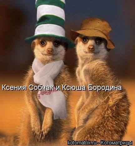 Котоматрица: Ксения Собчак и Ксюша Бородина