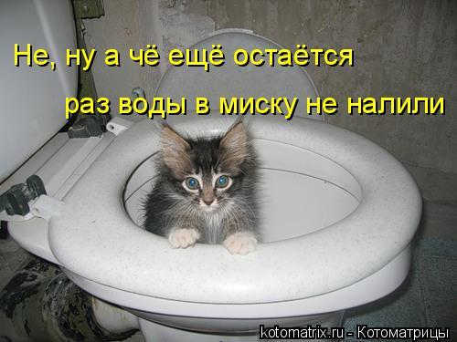 Котоматрица: Не, ну а чё ещё остаётся раз воды в миску не налили