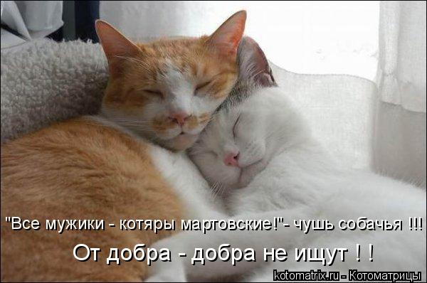 """Котоматрица: """"Все мужики - котяры мартовские!""""- чушь собачья !!! От добра - добра не ищут ! !"""