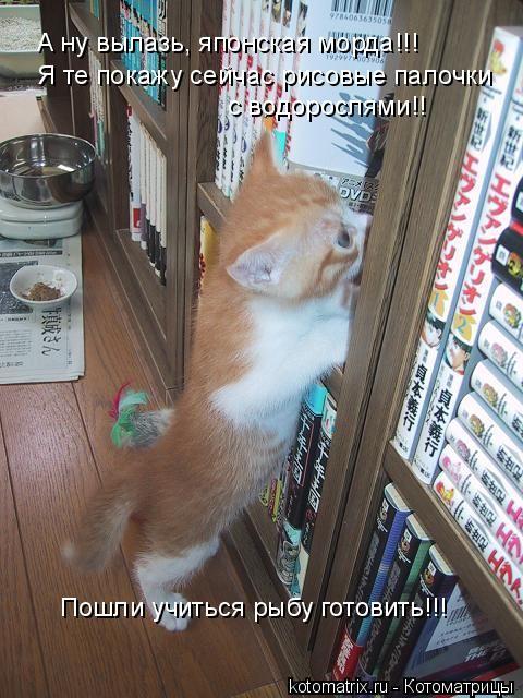 Котоматрица: А ну вылазь, японская морда!!! Пошли учиться рыбу готовить!!! Я те покажу сейчас рисовые палочки  с водорослями!!