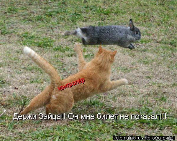 Котоматрица: Держи Зайца!! Он мне билет не показал!!! контролёр