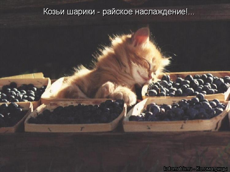 Котоматрица: Козьи шарики - райское наслаждение!...