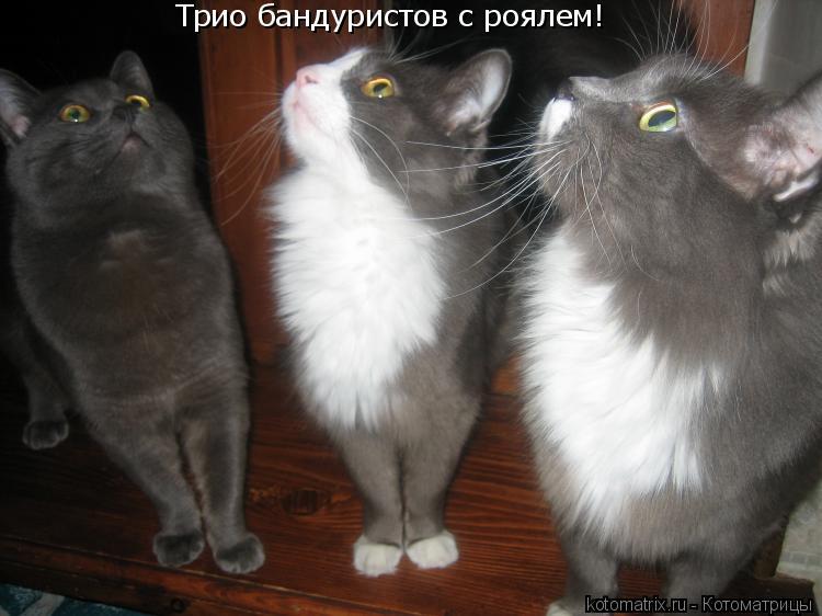 Котоматрица: Трио бандуристов с роялем!