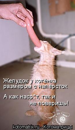Котоматрица: Желудок у котёнка размером с напёрсток А как наср*т, так и  не поверишь!