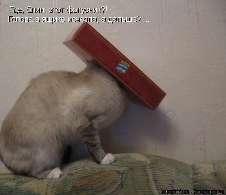 Котоматрица: -Где, блин, этот фокусник?! Голова в ящике исчезла, а дальше?....