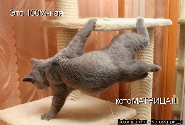Котоматрица: Это 100%-ная котоМАТРИЦА!!!