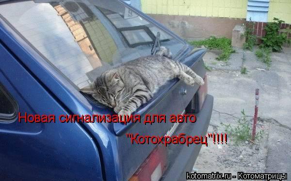 "Котоматрица: Новая сигнализация для авто ""Котохрабрец""!!!!"